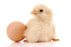 Un pulcino del bambino e un uovo Fotografie Stock