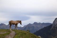 Un puledro in uno scenario della montagna. Fotografia Stock