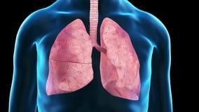 Un pulmón de los viejos manstock de ilustración