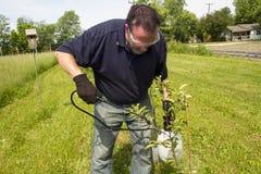 Un pulvérisateur organique étant appliqué à un pommier image stock