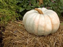 The Un-Pumpkin Royalty Free Stock Photography