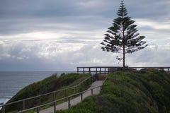 Un punto dell'albero fotografia stock