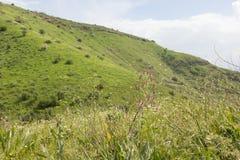 Un punto di vista delle montagne e dell'erba verdi, strade non asfaltate immagini stock
