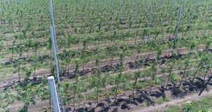 Un punto di vista delle piantine degli alberi dall'aria, sorvolare le piantine dell'albero, un Garden Center, un giovane giardino stock footage