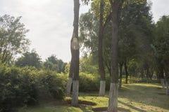Un punto scenico nel parco Fotografia Stock