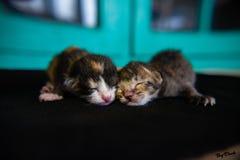 Un qu? gatito reci?n nacido lindo que duerme junto, el 30 de mayo de 2019, 09:03  imagen de archivo libre de regalías