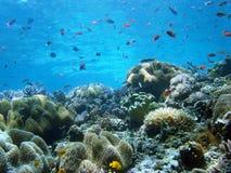 Un récif coralien lumineux coule avec la durée. Image libre de droits
