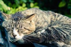 Un rêve doux du chat rayé brun paresseux fixant sur le pare-brise de voiture Images libres de droits
