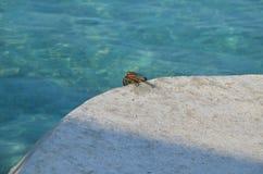 Un rêveur de crabe Photographie stock