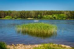 Un río con un bosque, cañas y un pescador en un barco fotos de archivo