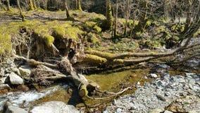 Un río corriente Fotografía de archivo libre de regalías