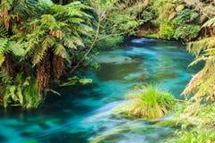 Un río de Nueva Zelanda, alimentado por las aguas de Te Waihou Blue Spring fotografía de archivo