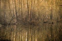 Un río del bosque en un paisaje de la primavera del bosque de la primavera Árboles de hojas caducas y su reflexión de la belleza Fotos de archivo libres de regalías