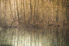 Un río del bosque en un paisaje de la primavera del bosque de la primavera Árboles de hojas caducas y su reflexión de la belleza Imagen de archivo libre de regalías
