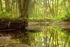 Un río en el bosque Imágenes de archivo libres de regalías