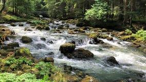 Un río en el medio de un bosque imagen de archivo libre de regalías