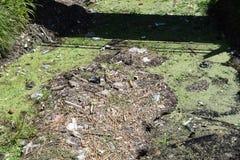 Un río, lanzaron desperdicios imagen de archivo