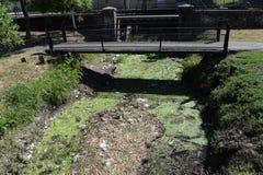 Un río, lanzaron desperdicios fotografía de archivo libre de regalías