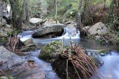 Un río pacífico en el bosque salvaje Foto de archivo libre de regalías