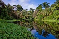 Un río y árboles en una selva tropical Foto de archivo