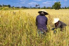 Un raccolto e un cielo di due agricoltori Fotografie Stock Libere da Diritti