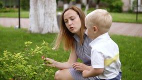 Un ragazzino è interessato in un cespuglio verde Contatto, fiutante lo I colloqui della mamma a suo figlio, spiegano Parco verde  video d archivio