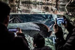 Un ragazzo allegro nell'acquario fotografie stock libere da diritti