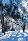 Un raggio del sole fa il suo modo attraverso i rami di albero immagini stock libere da diritti