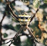 Un ragno Fotografie Stock