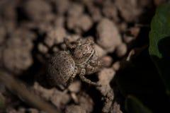 Un ragno Fotografie Stock Libere da Diritti