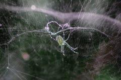 Un ragno casuale nella sua gabbia immagine stock libera da diritti