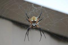 Un ragno di giardino Immagine Stock Libera da Diritti