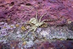 Un ragno su una pietra di colore Fotografia Stock