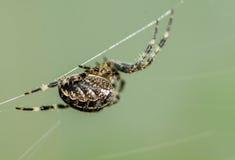 Un ragno sul suo web che attende preda immagini stock libere da diritti