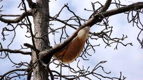 Un ramo che allunga per rivelare la bellezza dei rami del sole immagine stock
