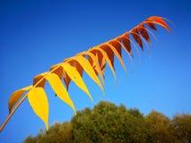 Un ramo con alcune foglie variopinte nella stagione di caduta immagini stock libere da diritti