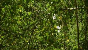 Un ramo con foglie verdi nel vento video d archivio