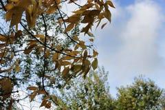 Un ramo con giallo va contro il cielo blu fotografia stock