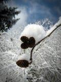 Un ramo con i abete-coni coperti di neve #1 Immagine Stock Libera da Diritti