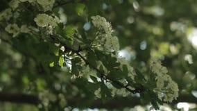 Un ramo con i fiori al sole
