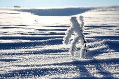 Un ramo con la brina sotto forma di una figura nell'inverno su un campo nevoso Fotografie Stock