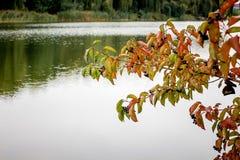 Un ramo con le foglie sui precedenti del fiume, in cui TR Immagine Stock Libera da Diritti
