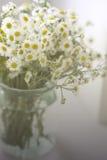 Un ramo de camomiles de los wildflowers en un tarro de cristal en una tabla por la ventana Tono del vintage Fotografía de archivo