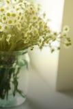 Un ramo de camomiles de los wildflowers en un tarro de cristal en una tabla por la ventana Tono del vintage Fotos de archivo