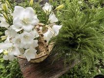 Un ramo de campanas blancas en la cesta Fotografía de archivo
