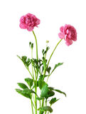 Un ramo de flor Fotografía de archivo