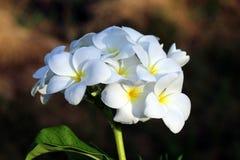 Un ramo de flores blancas en la rama de la planta foto de archivo