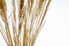 Un ramo de hierba seca Imágenes de archivo libres de regalías