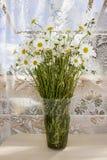 Un ramo de manzanillas en un florero transparente contra el contexto de los visillos Resto del verano Fotos de archivo