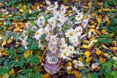 Un ramo de margaritas blancas en un florero en un fondo de las hojas del amarillo y de la vegetación verde imagenes de archivo